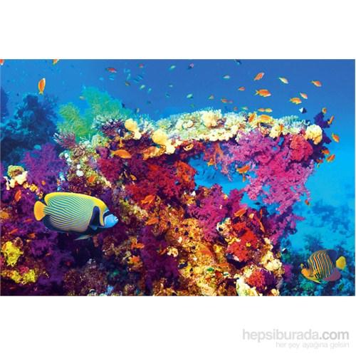 Fish And Coral Maxi Poster