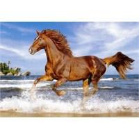 Castorland 500 Parça Horse On The Beach