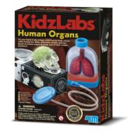 4M İnsan Organları 3374