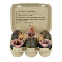 Neca Alien Xenomorph Egg Set İn Collectible Carton