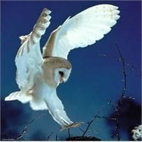 Heye Barn Owl (1000 Parça)