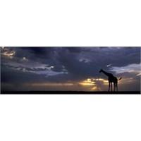 Heye Sunset, Edition Humboldt (1000 Parça, Panorama)
