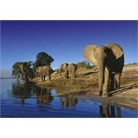 Heye Thirsty Elephants - Richard Du Toit (1000 Parça)