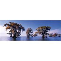 Heye Bald Cypresses - Humboldt (1000 Parça - Panorama)