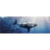 Heye White Shark - Humboldt (1000 Parça - Panorama)