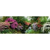 Heye Bodnant Garden (6000 Parça)