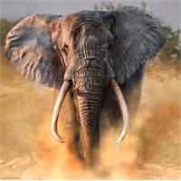 Heye Tusker (1000 Parça)