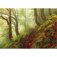Heye Path (1000 Parça)