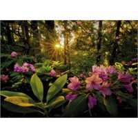 Heye Rhododendron ((2000 Parça)