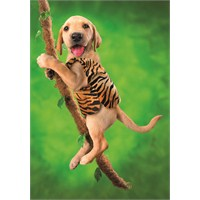 Dog Performer (500 parça)
