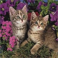 Kitten (1111 parça, kare)