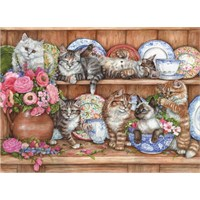 Yavru Kediler / Kittens