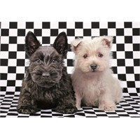 Educa 500 Parça Puzzle Checked Terriers