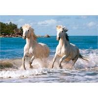 Castorland 1000 Parça Puzzle White Camargue Horses