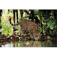Leopard (2000 parça)
