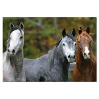 Educa 1000 Parça Puzzle Arabian Horses