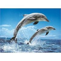 Clementoni 1000 Parça Puzzle Dolphins