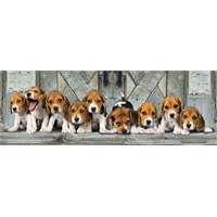 Clementoni 1000 Parça Puzzle Panorama - Beagles