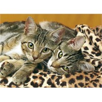 Clementoni 1000 Parça Puzzle The Eyes of the Cats