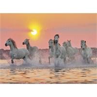 Clementoni 1500 Parça Puzzle Camargue Horses