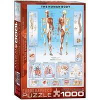 Eurographics Puzzle 1000 Parça İnsan Vücudu