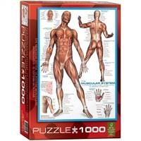 Eurographics İnsan Kas Sistemi Puzzle 1000 Parça