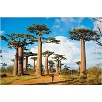Clementoni Madagascar - 1000 Parça Puzzle