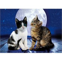 Clementoni Puzzle Cats In The Moonlight (1000 Parça)