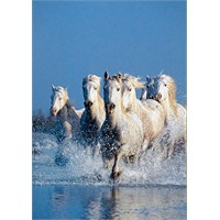 Clementoni Puzzle Horses (1000 Parça)