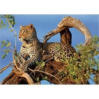Clementoni Puzzle Jaguar (1000 Parça)
