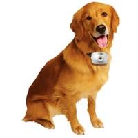 National Geographic Köpek Gözü Fotoğraf Makinesi