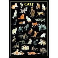 Cats, Wild Life (1000 Parça)