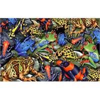 Kurbağalar (1000 Parça)