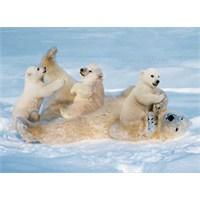 Polar Happiness (500 Parça)