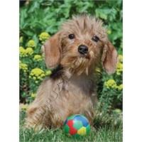 Sevimli Köpek (500 Parça)