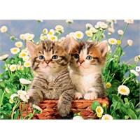 Sweet Kittens (1000 Parça)