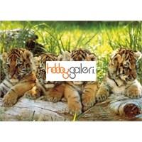 Four Tigers,Mark Goulding (200 Parça Puzzle)
