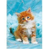 Ginger And White Kitten (500 Parça Puzzle)
