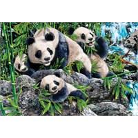 Panda Playground (500 Parça Puzzle)