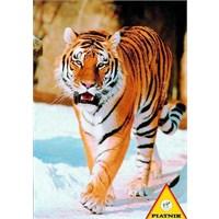 Siberian Tiger, Viesti (2000 Parça Puzzle)