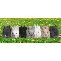 Tavşanlar, Michael Gunther (200 Parça Puzzle)