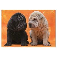 Educa Puzzle Puppies (500 Parça)