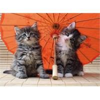 Ravensburger Yapboz 500 Parça Şemsiyeli Kediler