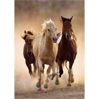 Clementoni Running Horses (1000 parça)