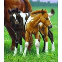 Sunsout Puzzle Two Foals (550 Parça)