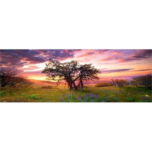 Heye Oak Tree (2000 Parça,Panaroma)