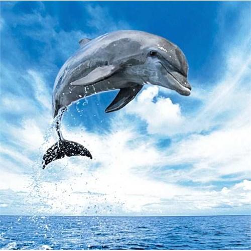 Heye Dolphin (1000 Parça)
