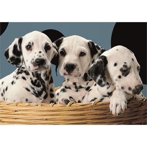 Dalmatins In Basket (500 parça)