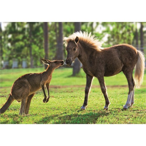 Kangaroo And Pony (500 parça)