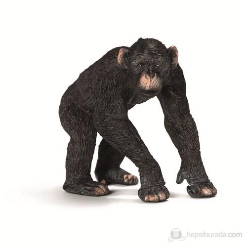 Schleich Yeni Şempanze Erkek 14678